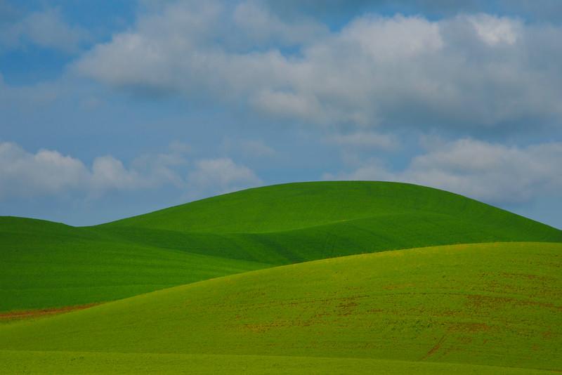 Shades Of Different Greens - The Palouse Region, Washington