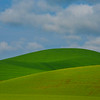 Shades Of Different Greens - The Palouse Region, Washington