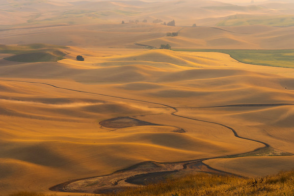 The Curve Through The Fields Of Gold - Steptoe Butte State Park, Palouse, Eastern Washington