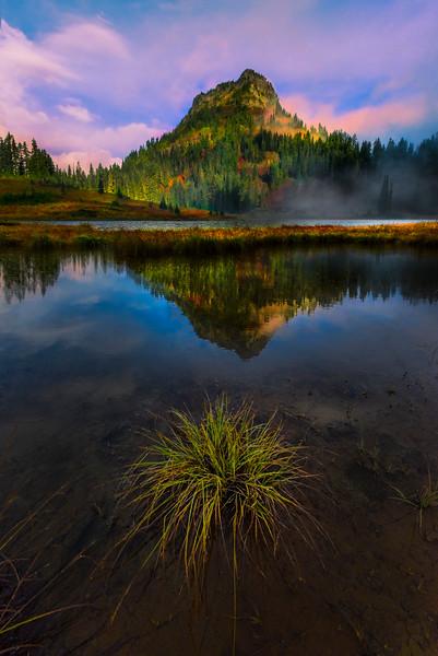 A Tuff Of Grass At Lower Tipsoo Lake -Mount Rainier National Park, Washington
