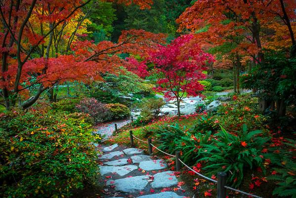 Fall Colors In The Washington Arboretum, Seattle, WA Guided By Color - Washington Arboretum, Seattle, Washington St
