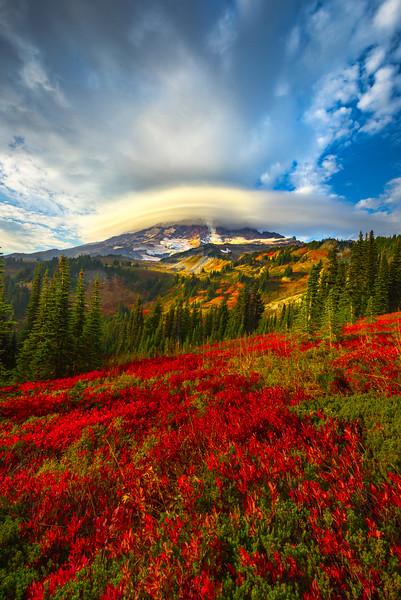 Updraft On Mt Rainier - Paradise Side, Mt Rainier National Park, WA