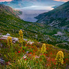 Beargrass On The Ridge Of Norway Pass