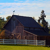 A Piece Of Rural Life - Vashon Island ,WA