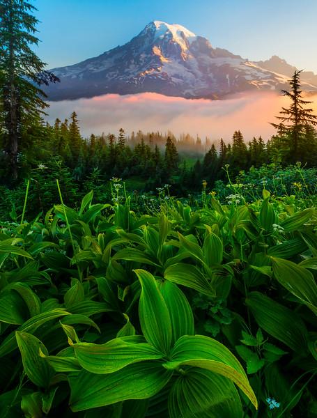 Sunrise Green Glow_Mount Rainier National Park_Washington