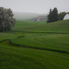 Misty Morning In The Palouse - The Palouse Region, Washington