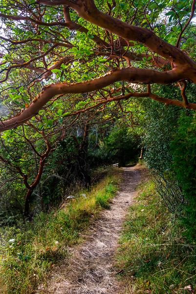 Madrona Trails, English Camp Trail, Friday Harbor, San Juan Islands, WA