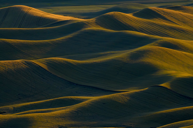Rolling Light Waves From Steptoe Butte - The Palouse Region, Washington