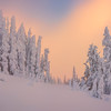 Sunset Reds Showcasing Fresh Snow - Paradise Area, Mount Rainier National Park, WA