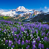 Dips And Lows Of Wildflower Meadows And Mount Baker - Skyline Divide, Mount Baker, WA