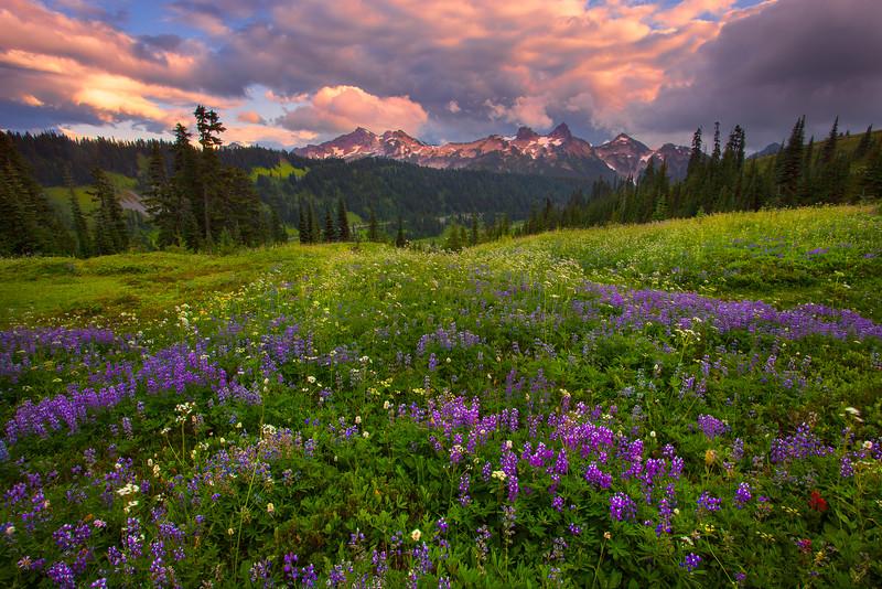 Stunning Skies Above The Tatoosh Range, Mazama Ridge, Mount Rainier National Park, WA,