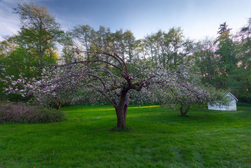 Gardens Of Solitude - Vashon Island ,WA