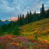 Converging Lines Of Autumn - Paradise Side, Mt Rainier National Park, WA