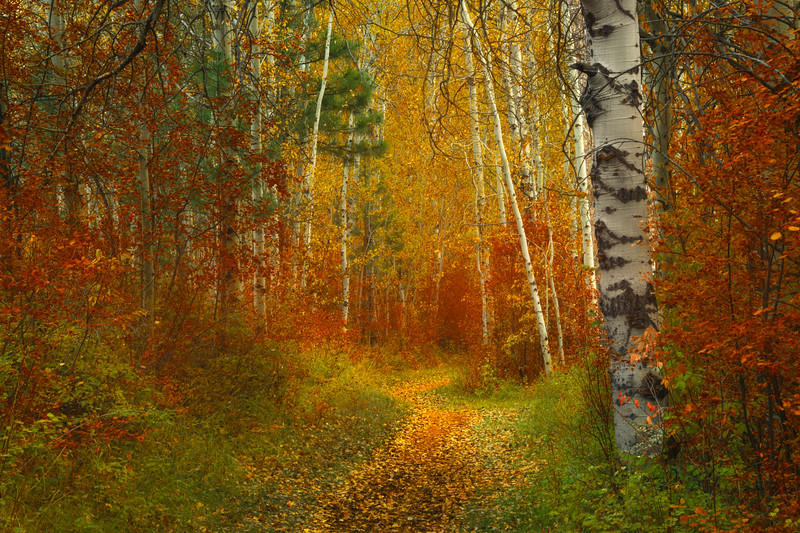 Deep Into The Autumn Forest - Methow Valley, Washington State