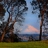 Framed Madronas -  Vashon Island ,WA