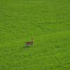 All By Himself -The Palouse, Eastern Washington And Western Idaho