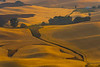 Waves Of Golden Brown - Steptoe Butte State Park, Palouse, Eastern Washington