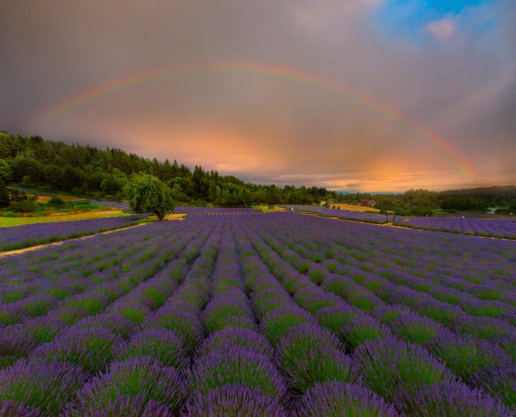 Rainbows After The Storm - Pelindaba Lavender Farm, San Juan Islands, WA