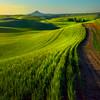 The Rolling Waves Of The Palouse -The Palouse, Eastern Washington And Western Idaho