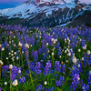 Twilight Blues - Skyline Divide, Mount Baker, North Cascades National Park, WA