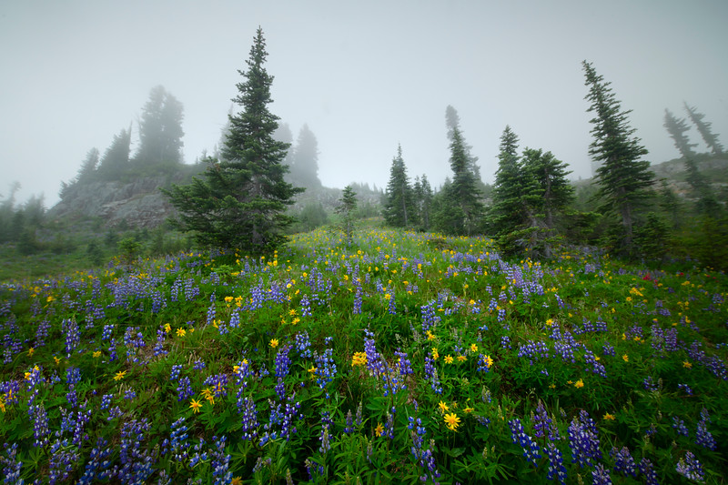 Looking Up Into The Mist - Mount Rainier National Park, WA