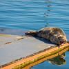 Guest On The Dock - Alderbrrok Resort & Spa, Union, Washington