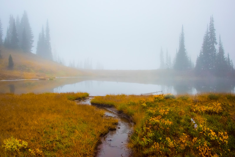 Fall Color Surrounding Tipsoo Lake In Mist -Mount Rainier National Park, Washington