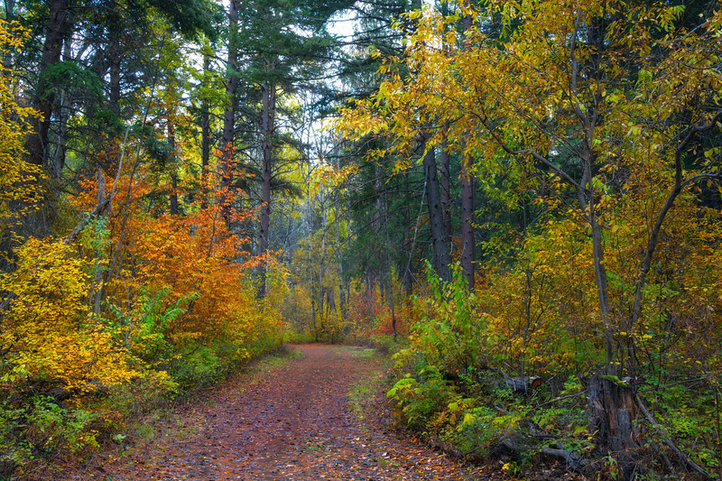 A Brisk Autumn Morning In The Methow Forest - Methow Valley, Washington State