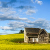Pano Of Webber House In Canola - The Palouse Region, Washington