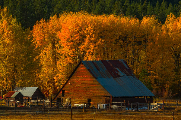 Late Afternoon Light On The Barn - Leavenworth, Central Washington, WA