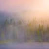 Early Morning Mist At Mt Rainier - Mt Rainier National Park, WA