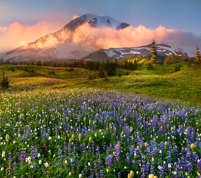 Low Lying Sunset Clouds At Base Of Mt Rainier - Mazama Ridge, Paradise Meadows, Mount Rainier National Park, WA
