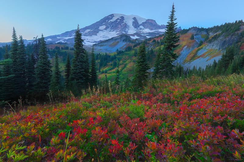 Looking Down Into The Valley Of Red - Mazama Ridge, Mount Rainier National Park, WA