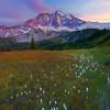 Path Of White Lilies - Mystic Lake, Mount Rainier National Park, WA
