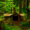 A Cabin In The Woods_Pt 2 Sol Duc Falls, Olympic National Park, WA