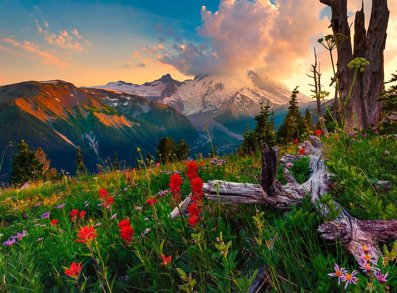 Shaft Of Light And Flowers - Sunrise Side, Mount Rainier National Park, Washington