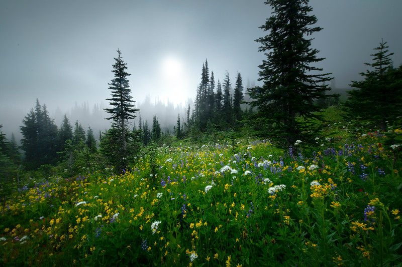 Meadows Of Color In The MIst - Mount Rainier National Park, WA