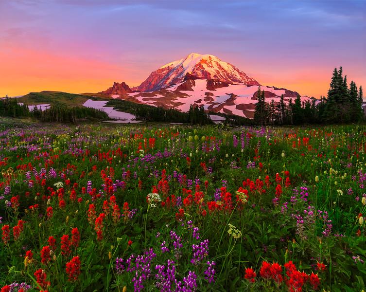 Spray Park Wildflower Blast - Spray Park, Mount Rainier National Park, Washington