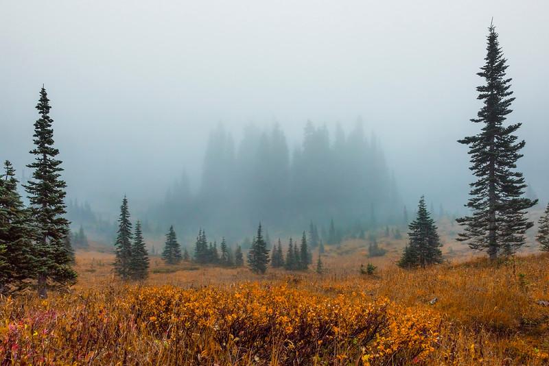 Looking Down On Lower Tipso -Mount Rainier National Park, Washington