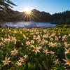 Avalanche Valley - Spray Park,  Mount Rainier National Park, Washington