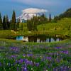 A Little Tarn With Reflection Of Mt Rainier - Naches Peak Trail,  Mt Rainier National Park, WA