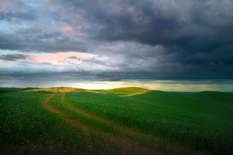 Pathway Through The Green Fields - The Palouse Region, Washington