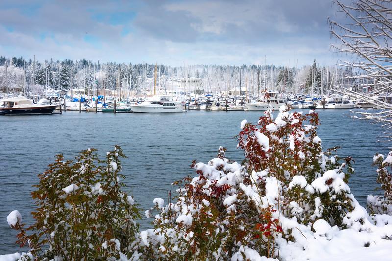 Olympia Marina Inlet In Snow