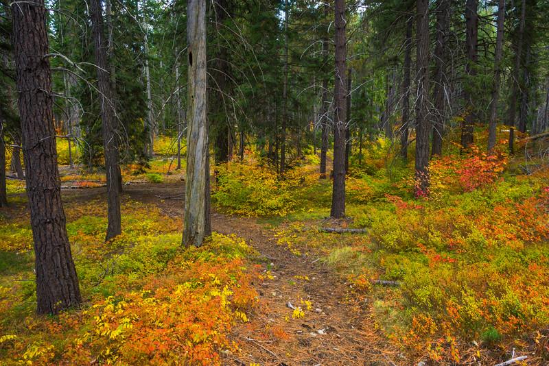 The Pathway Into Color - Lake Wenatchee State Park, Leavenworth, WA
