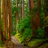 The Right Direction Of Solitude Sol Duc Falls, Olympic National Park, WA