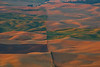 Golden Square Of Golden Brown - Steptoe Butte State Park, Palouse, Eastern Washington