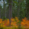 Mix Of All Colors In The Forest - Lake Wenatchee State Park, Leavenworth, WA