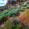 Wildflowers Leading Upstream - Casper, Wyoming
