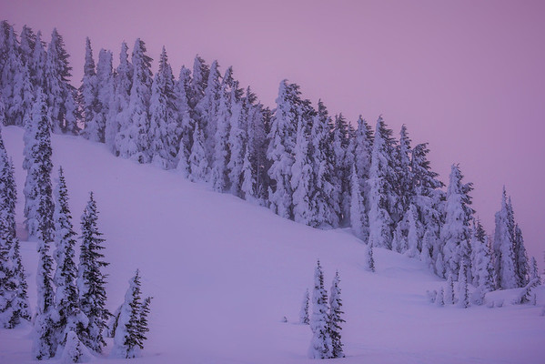 White Winter Twilight - Paradise Area, Mount Rainier National Park, WA