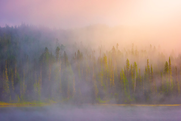 Early Morning Mist At Mt Rainier